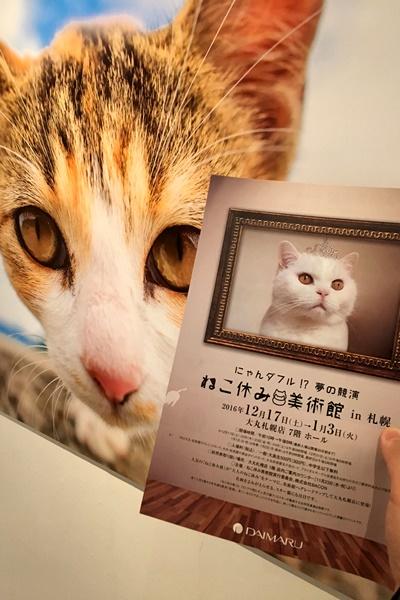 猫休み1.JPG