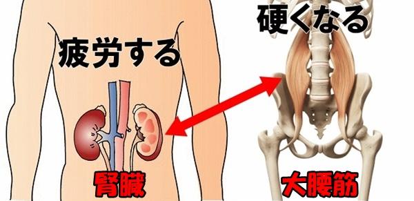 腎絵1.jpg