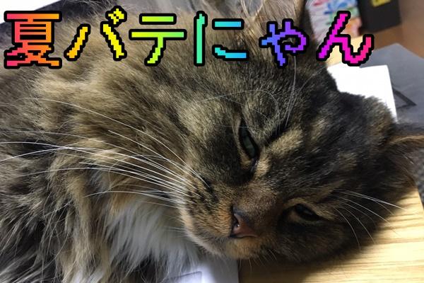 ズッキ3.JPG