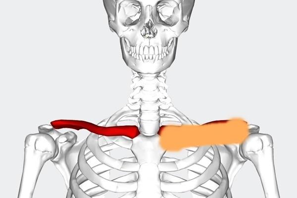 鎖骨結腸.jpg